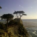pacific ocean northern california cyprus point cyprus tree